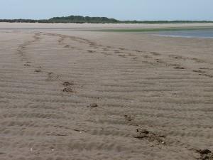 Hoof Prints In The Sand
