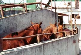 Unloading horses at the border