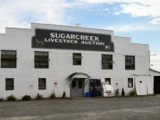 Sugar Creek Auction