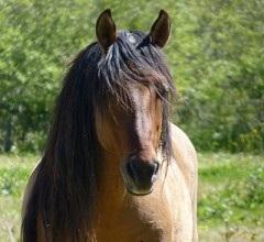 Saving Americas Horses