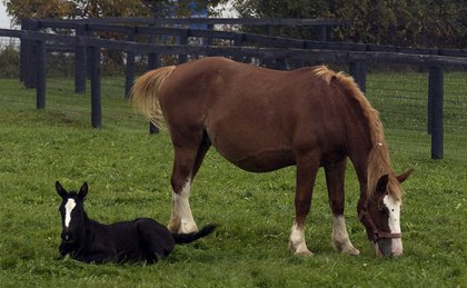 Council members will work to discourage overbreeding and to promote responsible horse ownership. Photo by Anne M Eberhardt