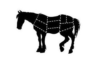 BLM reins in wild horses