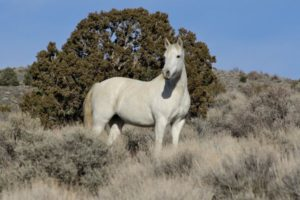 la-na-nn-nevada-wild-horses-20130228-001