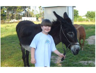 Teri is a cute, kid-friendly donkey - a perfect example of a donkey!