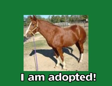mymia1adopted