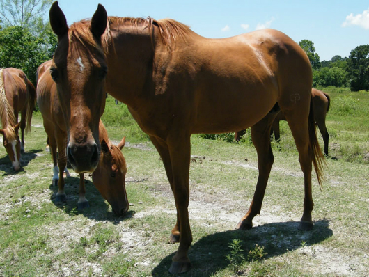 Amee - Adoptable Horse
