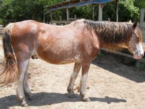 Billy - Adoptable Horse