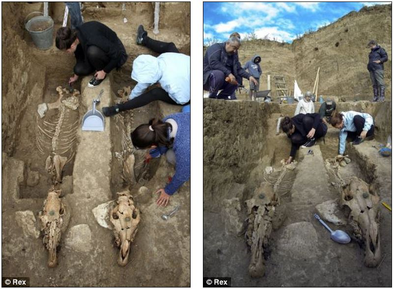 The chariot and horse skeletons are 2,500-years-old and were discovered in the village of Svestari in north-east Bulgaria Read more: http://www.dailymail.co.uk/sciencetech/article-2433197/Mystery-2-500-year-old-horse-remains-Bulgaria-suggest-creatures-buried-standing-up.html#ixzz2g225I3B5