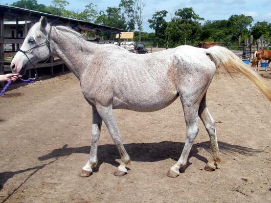 Celine - adoptable horse