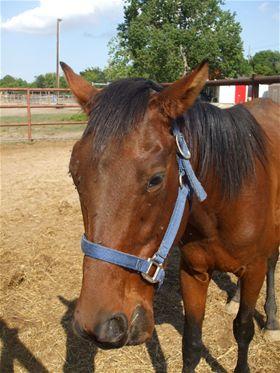 Harper - Adoptable Horse