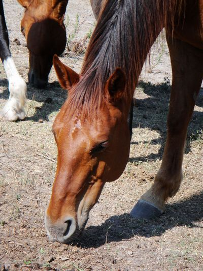 Haven - adoptable horse