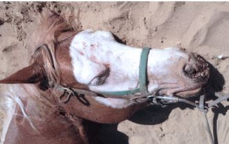 san diego horse cruelty leads to death