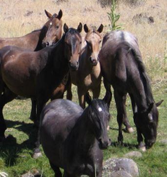 Massacre Lake Horses