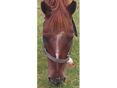 Blu - Adoptable Horse