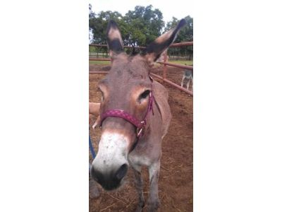 Earl - Adoptable Donkey