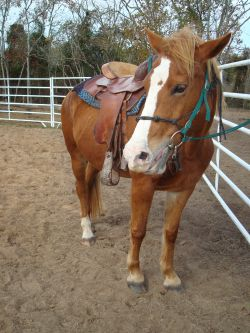 Jada - Adoptable Horse