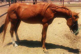 Minne - adoptable horse