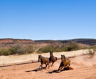 Australian hors cull