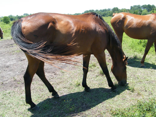 Janet - adoptable horse