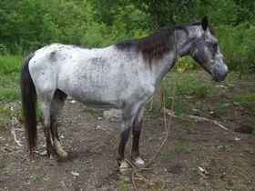 Kazi - Adoptable Horse