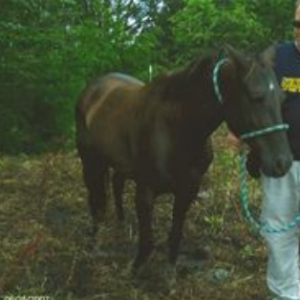 Kings Anya - adoptable horse