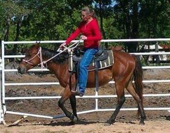 Merida - adoptable horse