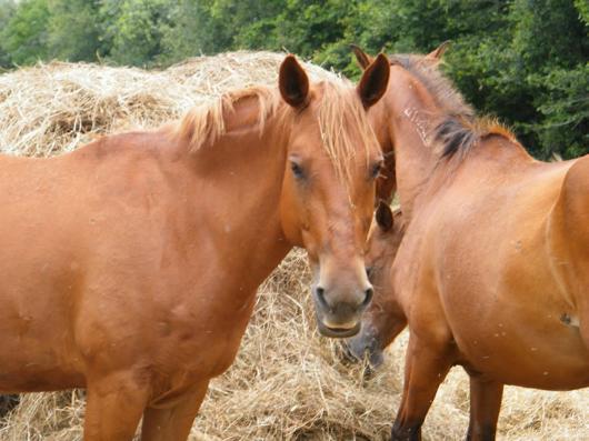 Moira - adoptable horse