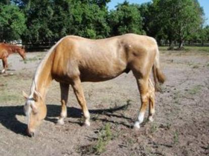 Navarro - Adoptable Horse