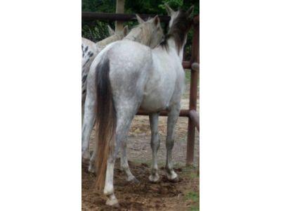Nikita - adoptable horse