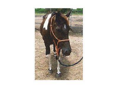 Raiha - adoptable horse