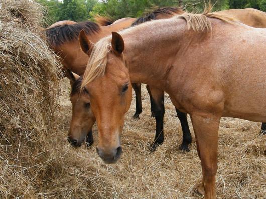 Si-Kis - Adoptable Horse