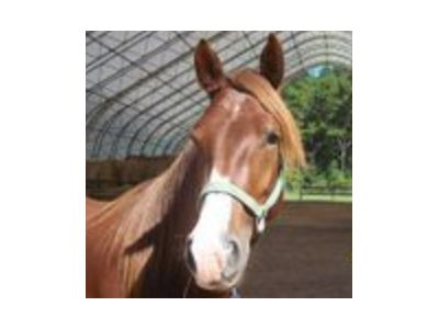 Sugar Sweet - Adoptable Horse