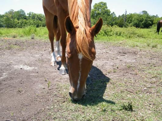 Trini - Adoptable Horse