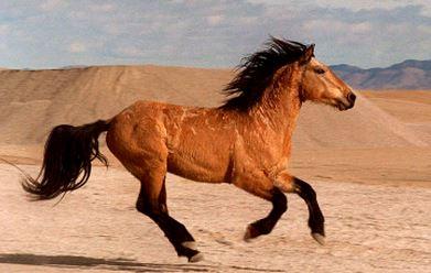 Wild Horses in Elko NV