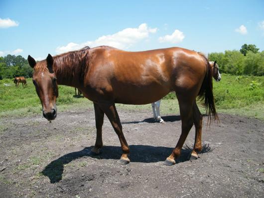 Willina - Adoptable Horse