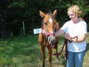 FC #13 - adoptable horse