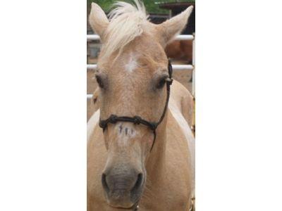 Barney - adoptable horse