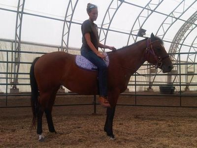 Galina - adoptable horse