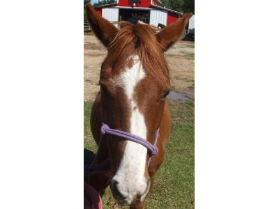 Lil Pie - adoptable horse