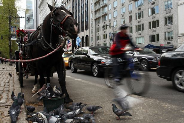 NYC Central Park Carriage Rides