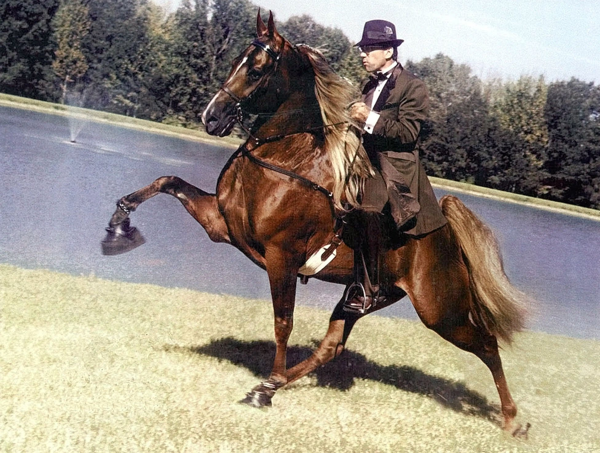 A Tennessee Walking Horse with chains and large, heavy weights attached to its hooves. Both would be banned under Whitfield's legislation. (AP Photo/Courtesy Harrell Brawner, File)