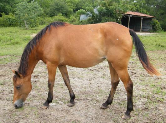 Zada - adoptable horse