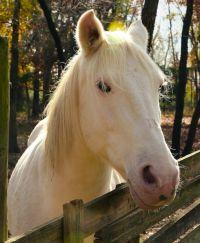 cherokee horse