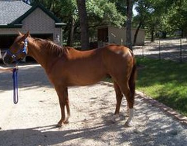 Mooney - adoptable horse