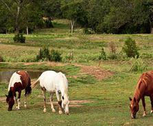 Oklahoma horse industry