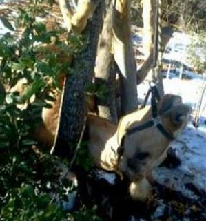 Placerville horse accidentally slips