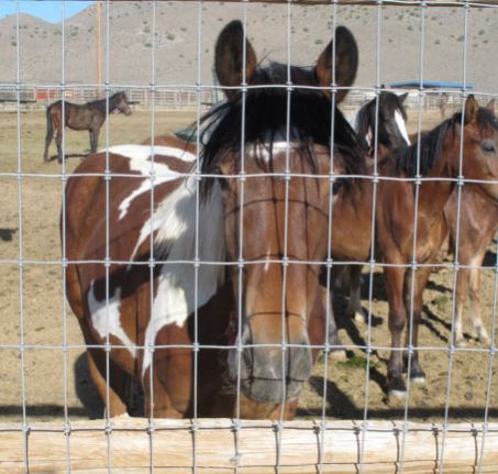 BLM wild horse and burro appropriate management level program
