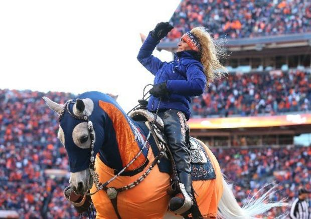 Denver Bronco Mascot Thunder