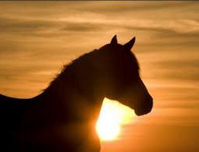 Horses in Songs