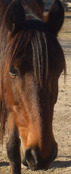 Clara is an adoptable horse